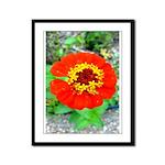 red flower Onondaga State Park Mo f Framed Panel P