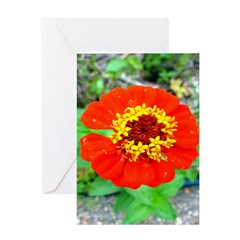 red flower Onondaga State Park Mo f Greeting Card