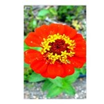 red flower Onondaga State Park Mo f Postcards (Pac