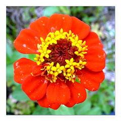 red flower Onondaga State Park Mo f Square Car Mag