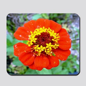 red flower Onondaga State Park Mo f Mousepad