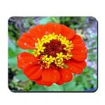 red flower Onondaga State Park Mo f Mousepad