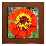 red flower Onondaga State Park Mo f Framed Tile
