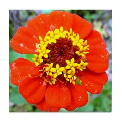 red flower Onondaga State Park Mo f Tile Coaster