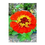 red flower Onondaga State Park Mo f 5'x7'Area Rug