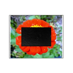 red flower Onondaga State Park Mo f Picture Frame