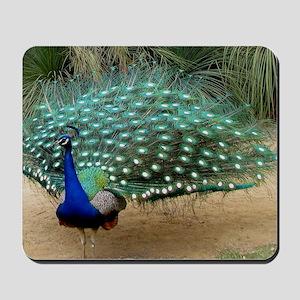 Pretty California Peacock Mousepad