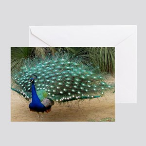 Pretty California Peacock Greeting Card