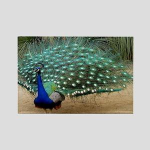 Pretty California Peacock Rectangle Magnet