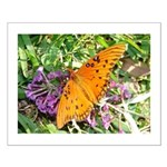 Beautiful Butterfly Small Poster
