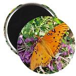 Beautiful Butterfly 2.25