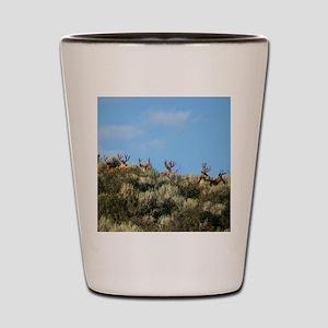 Summer bucks Shot Glass