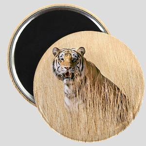 Kipling the tiger in field Magnet