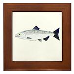 Chinook King Salmon f Framed Tile