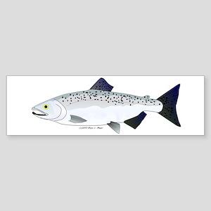 Chinook King Salmon f Bumper Sticker