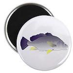 Freshwater Drum fish (aka Sheephead) Magnet