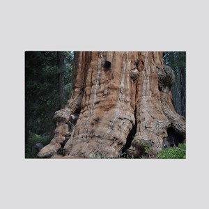 Giant Sequoia Rectangle Magnet