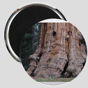 Giant Sequoia Magnet