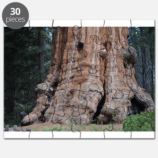 Giant Sequoia Puzzle