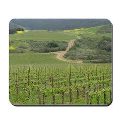 Santa Barbara Grape Vines