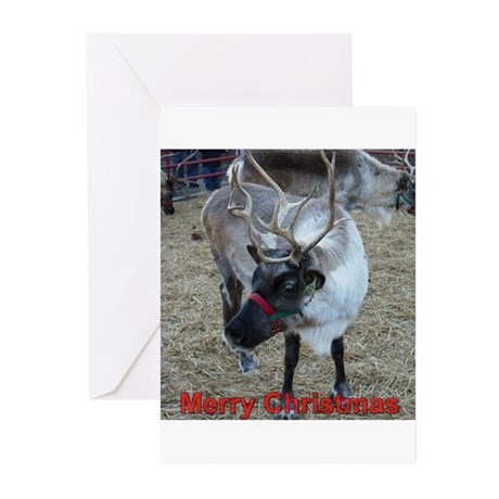 Christmas Reindeer Greeting Cards (Pk of 10)