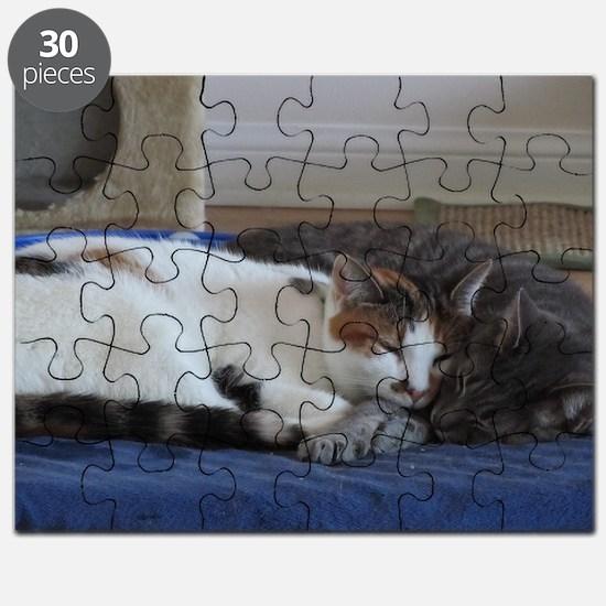 Funny Kitties Puzzle