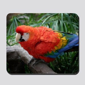Scarlet Macaw Mousepad