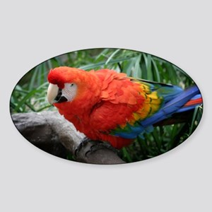Scarlet Macaw Sticker (Oval)
