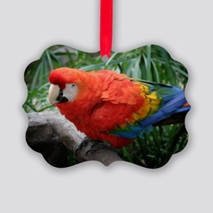 Scarlet Macaw Picture Ornament