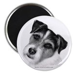 Jack (Parson) Russell Terrier 2.25