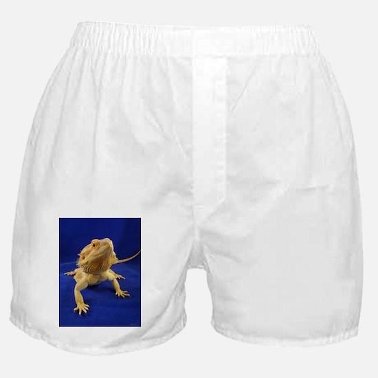 Bearded Dragon Boxer Shorts