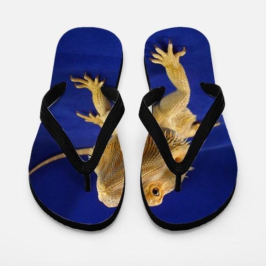 Bearded Dragon Flip Flops