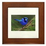 Yelverton Blue Wren Framed Tile