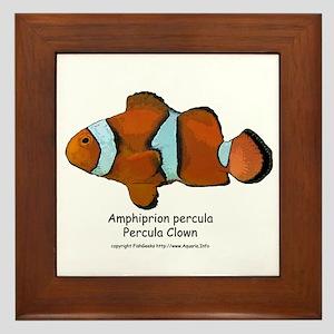 Percula Clown Framed Tile