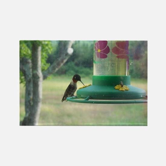 Ruby Neck Hummingbird Rectangle Magnet