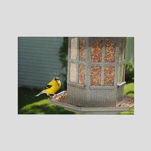 Yellow Bird Feeding Rectangle Magnet