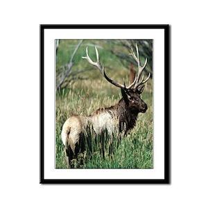 Elk Bull Framed Panel Print