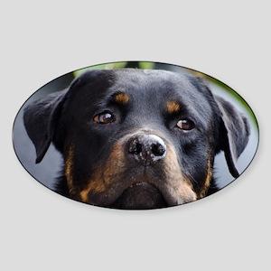 Rottweiler Dog Sticker (Oval)