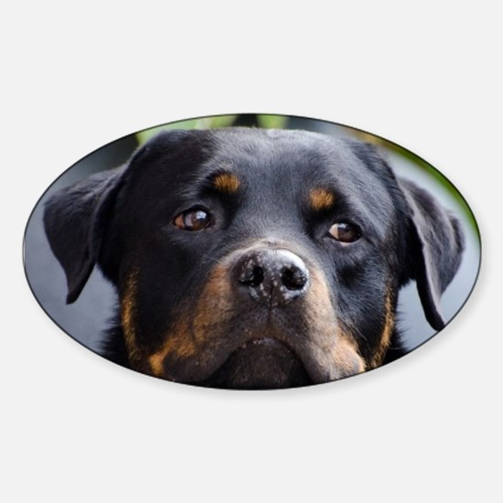 Rottweiler Dog Sticker (Oval)
