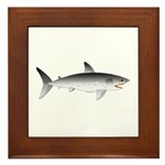 Megalodon Shark f Framed Tile