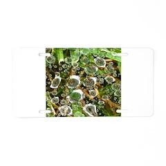 Dew on Grass 1x2 Aluminum License Plate