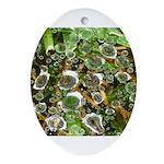 Dew on Grass 1x2 Ornament (Oval)