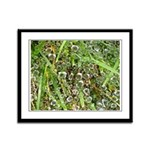Dew on Grass 1x2 Framed Panel Print