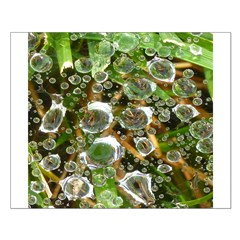 Dew on Grass 1x2 Posters