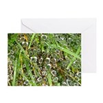 Dew on Grass 1x2 Greeting Card