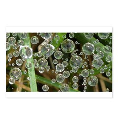 Dew on Grass 1x2 Postcards (Package of 8)