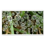 Dew on Grass 1x2 Sticker