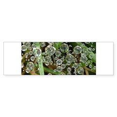 Dew on Grass 1x2 Bumper Bumper Sticker
