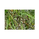Dew on Grass 1x2 Rectangle Magnet (100 pack)