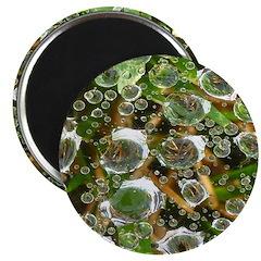 Dew on Grass 1x2 Magnet
